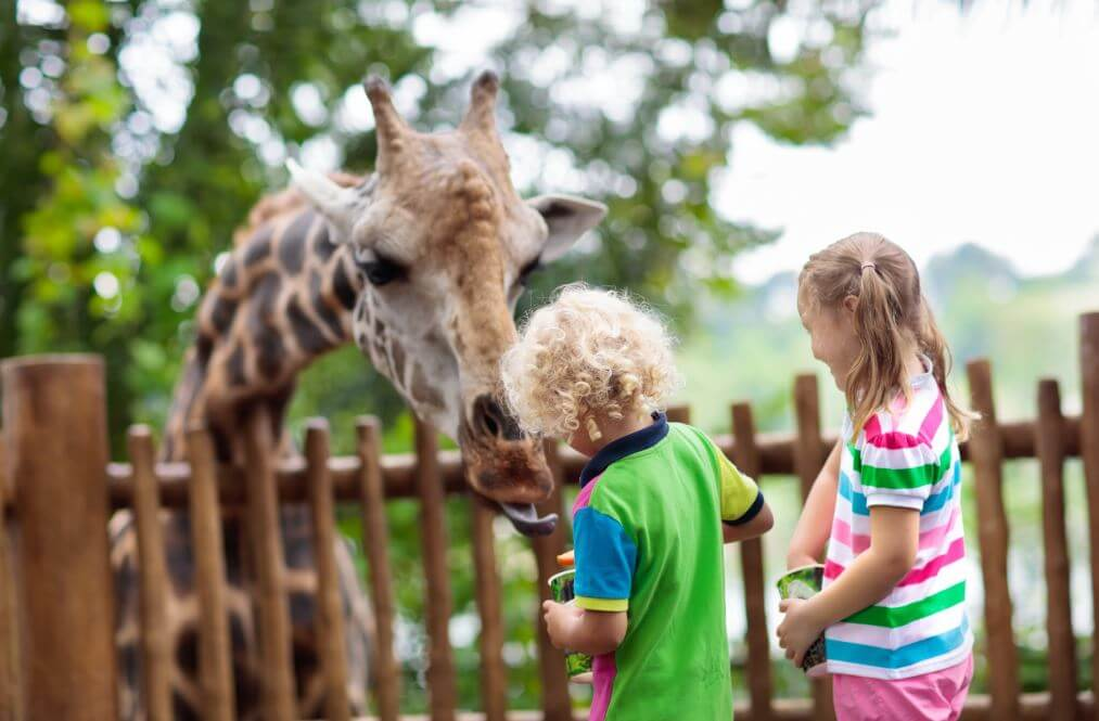Tips for Taking Baby to the Zoo